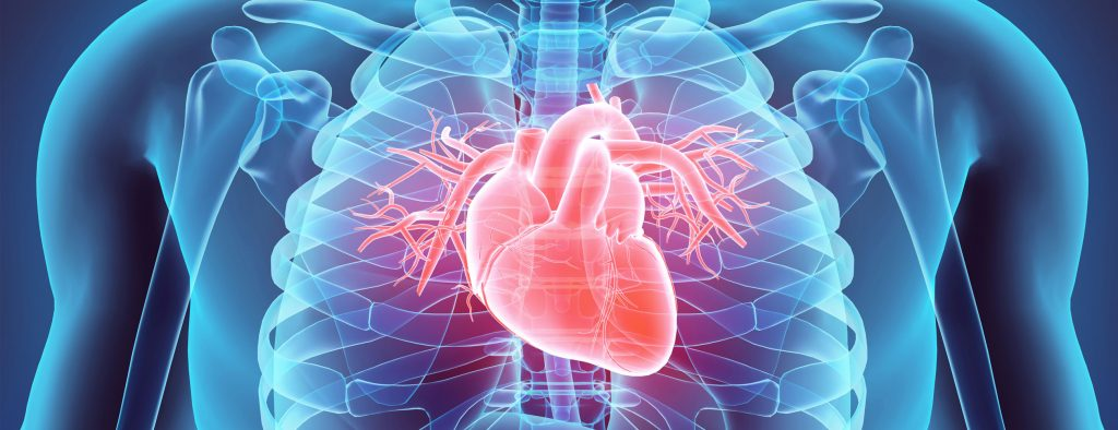 Learn about the comprehensive, quality heart care services at Hookman Cardiology.